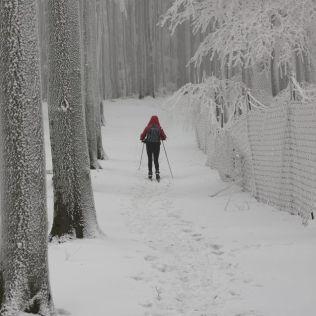 Na chodníku popri obore neďaleko Panských uhlísk.