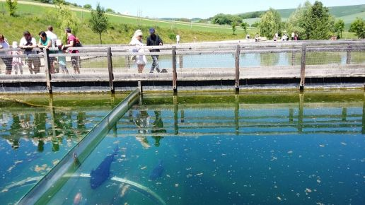 """Expozícia """"Živá voda"""" - podvodné tunely, ktorými sa pozorujú sladkovodné ryby."""
