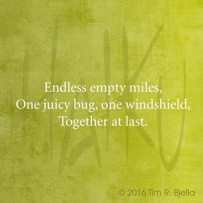 Haiku - Bug and Windshield
