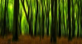 Motion Blur Forest