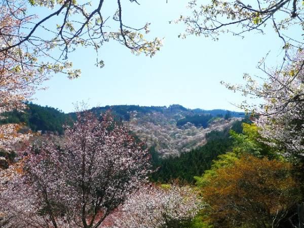 奈良県デートスポットランキング♥地元民おすすめ10選 吉野山