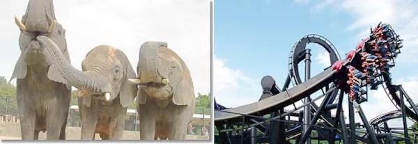 姫路のデートスポット5. 遊園地も動物も!姫路セントラルパーク