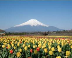 山梨県デートスポト④お花に囲まれる!フローラルドームふらら(花の都公園)