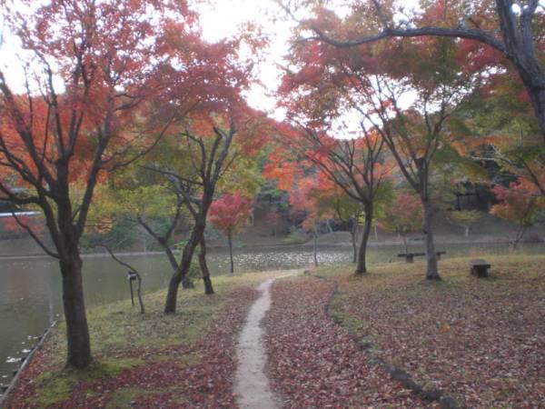 茨城県紅葉名所⑥家族で散策がおすすめ!北山公園