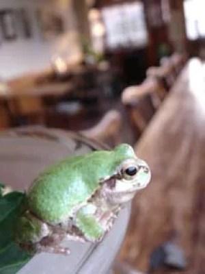 札幌カフェランキング⑦高い天井とカエルたちがお出迎え「カエルヤ珈琲店」