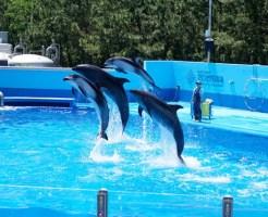新潟県遊び場ランキング⑨マリントンネルがすごい「マリンピア日本海」