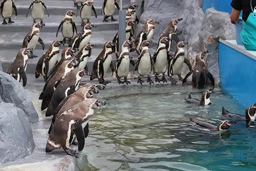 愛知県知多半島デートスポットランキング④イルカと触れ合い、ペンギンの餌付けができる水族館「南知多ビーチランド」