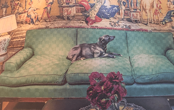Antique Sofa and Dog.