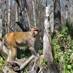 monkey tour bk adventure