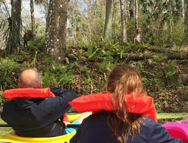 Kayaking Orlando Monkey Tour Silver Springs Florida