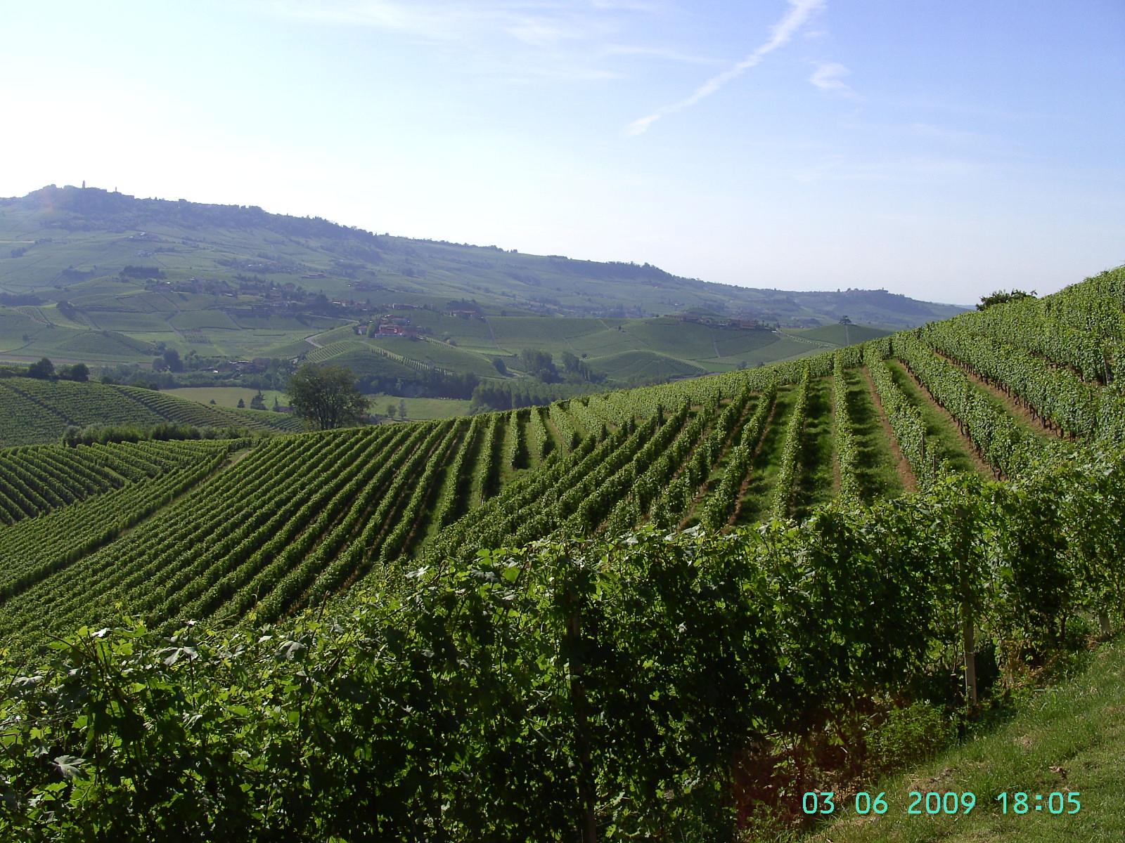 das Filetstück-der Vigna San Giuseppe