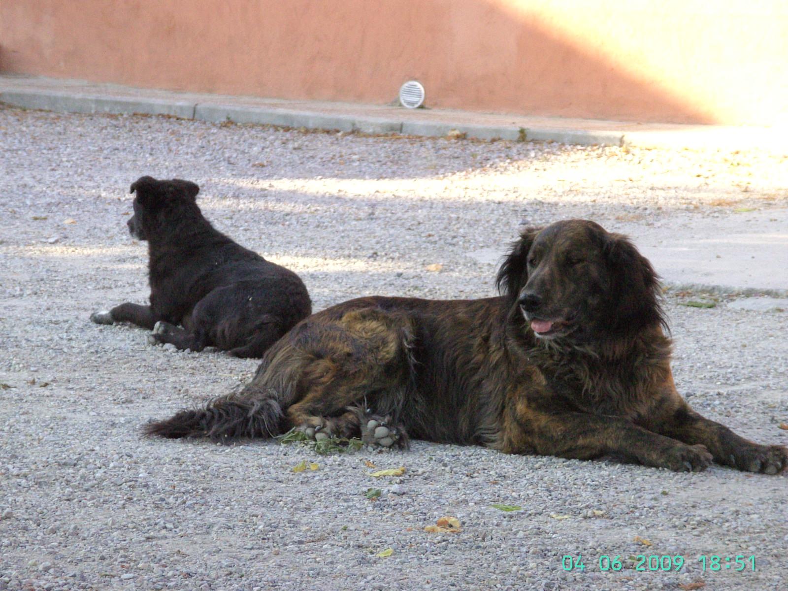 Dodo und Masca: die heimlichen Herrscher des Hofes