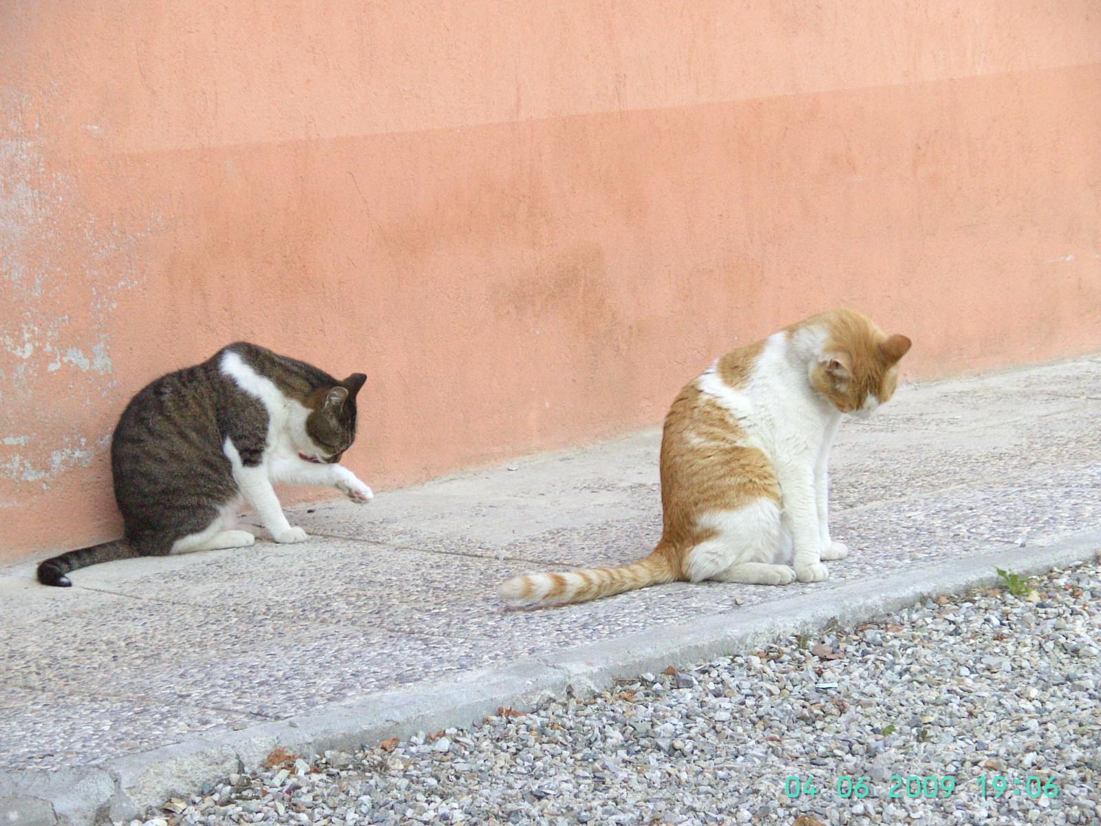 Katzenwäsche - die Linke fremdelt etwas, die rechte will immer gekrault werden