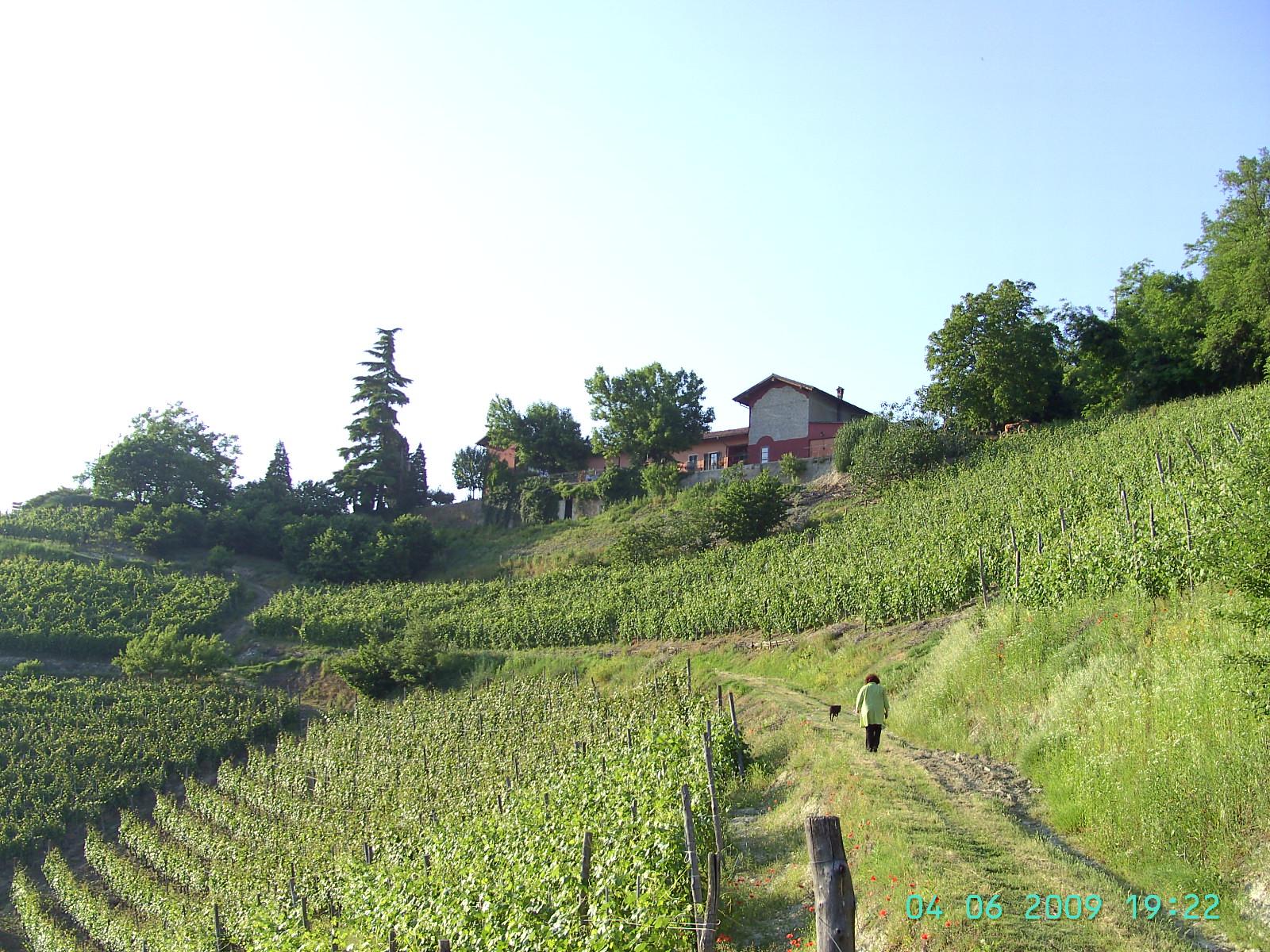 Agriturismo und Weingut Cascina Sant´Eufemia (Sinio)
