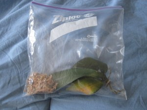 Orchid sphag-n-bag