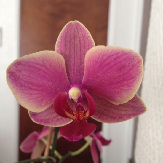 Avalon room bloom