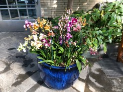 Potted orchid display at Orchid Spectrum