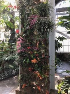 Oncidium Alliance on display