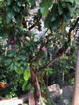 Epiphytic orchids on display