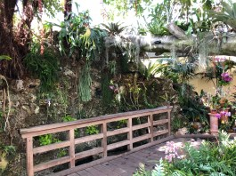 Orchid room at USBG