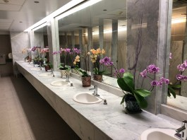 Orchid bathroom display