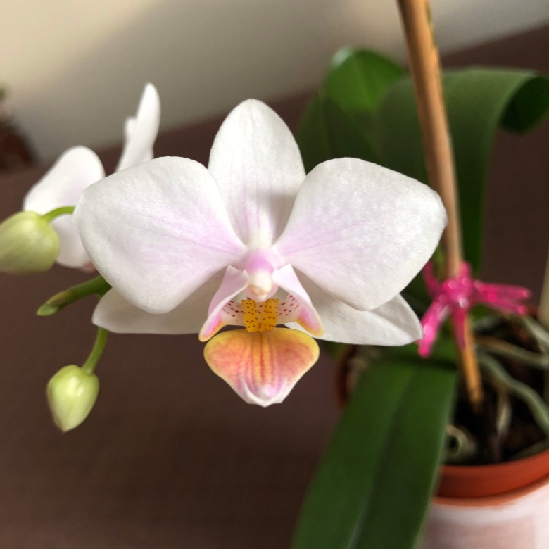 New bloom #2