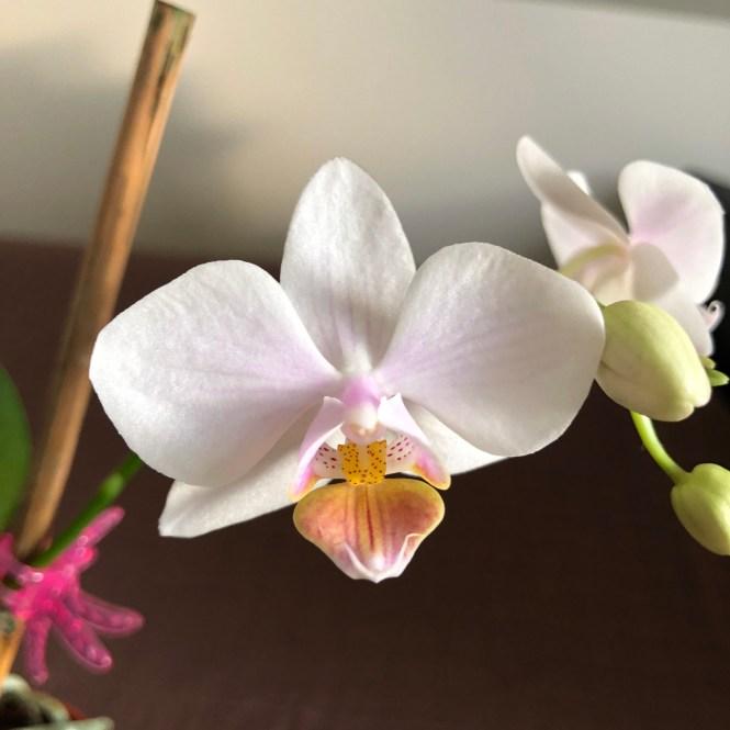New bloom #1