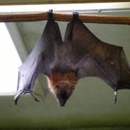 #179: Bat Sh*t