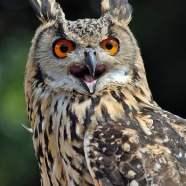 #165: Do Birds Have Eyes?