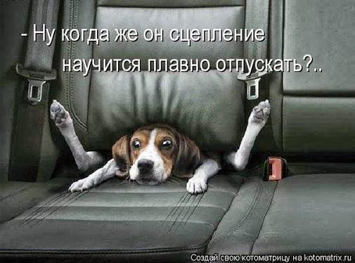 собака и сцепление