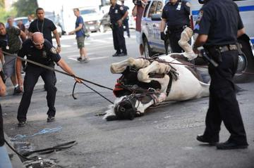 A horse was captured and detained after it broke away from its owner and carriage in the middle of traffic