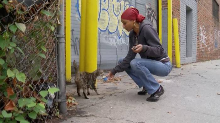 A group of Brooklyn feline-loving activists, who have set out to aid NYC's street cats, are in the center of a new documentary.