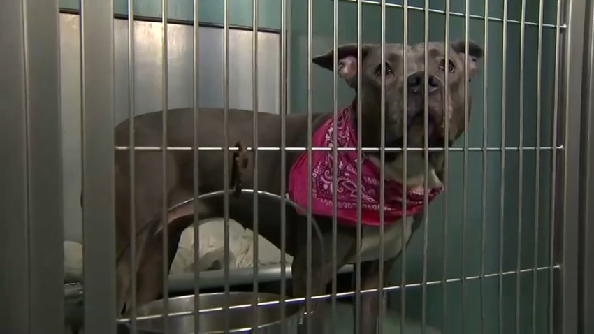 NYC Animal Shelter Forced to Temporarily Close Due to COVID Hopes to Find Foster Homes