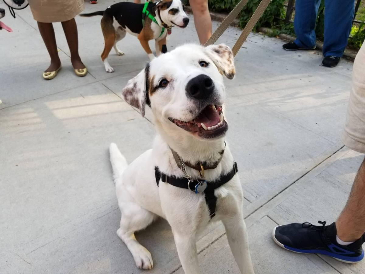 Fort Greeners and their pups rally to save local dog run