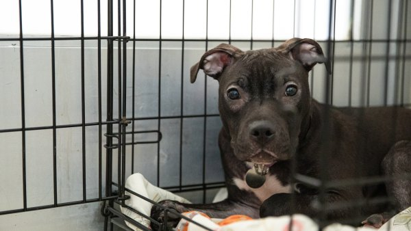 20 Dogs Rescued from Disturbing Animal Hoarding Situation in Brooklyn: Police