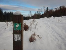 Abriachan run winter (3)