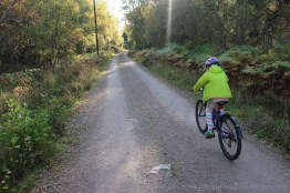 Cycling into the evening sunlight along the trail to Loch an Eilein.