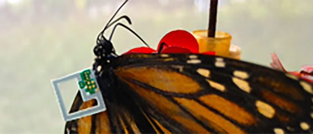 Butterfly with a sensor