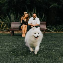 white fluffy dog running towards camera when Melbourne wedding photographers shooting a couple of their engagement photography in Royal Botanical Gardens engagement photos