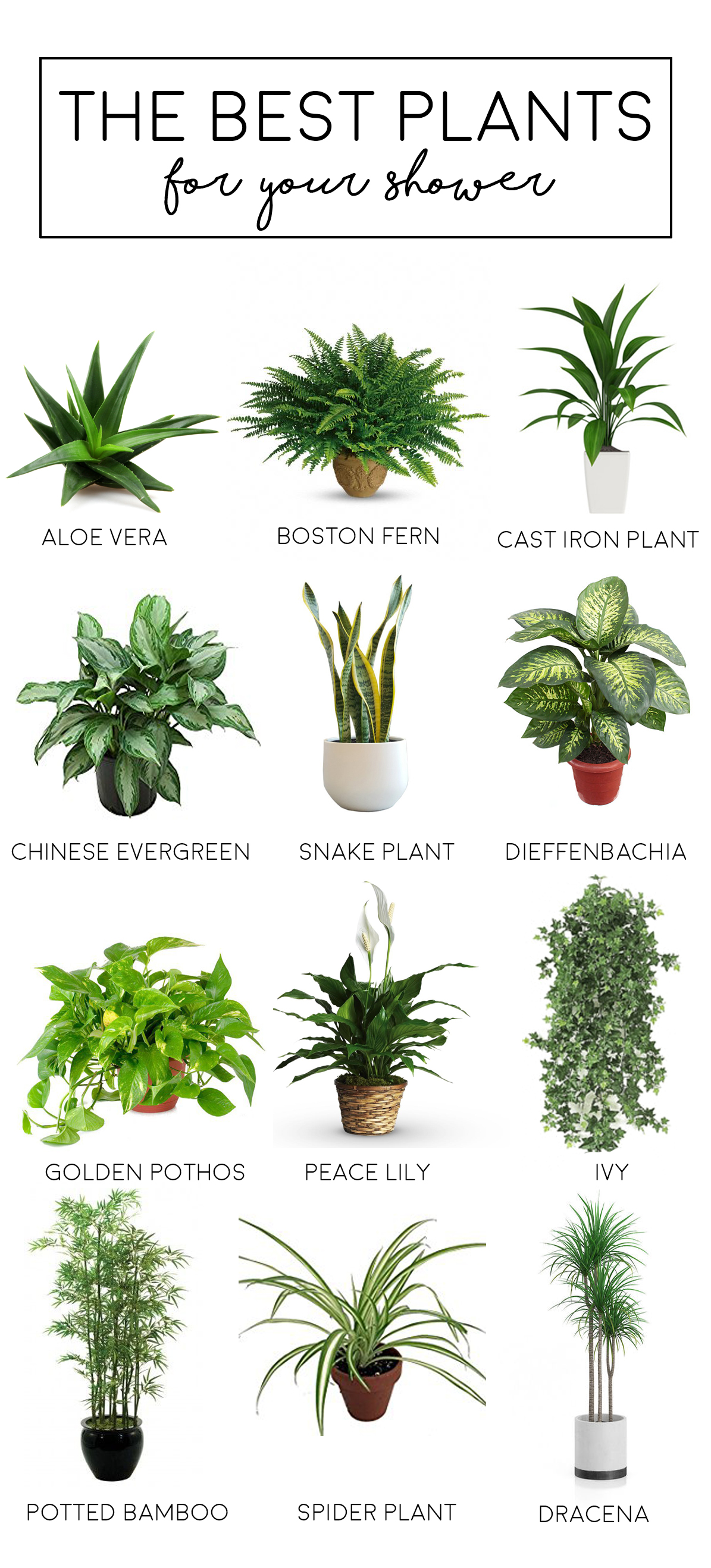 Best Indoor Trailing Plants