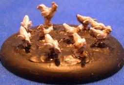 Chicken flock large