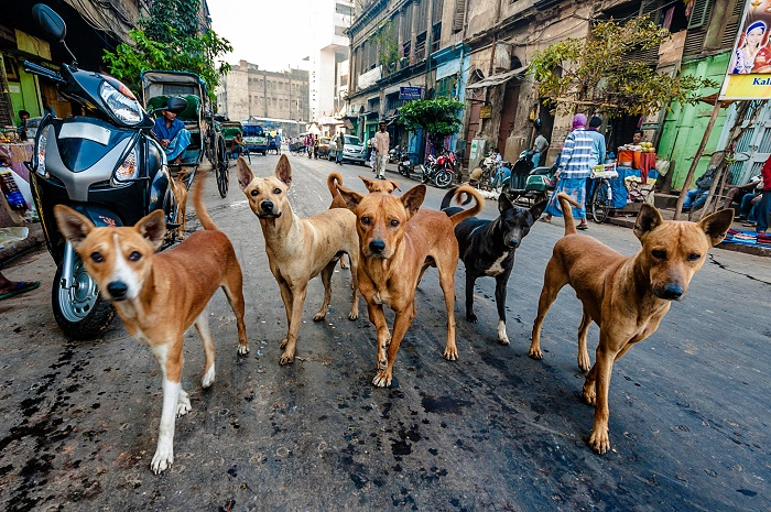 Image result for dog attack on child in india