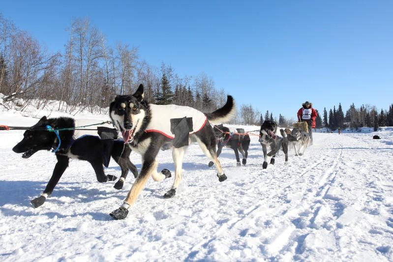 FILE PHOTO: Dave Delcourt competes in the official restart of the Iditarod, a nearly 1,000 mile (1,610 km) sled dog race across the Alaskan wilderness, in Fairbanks, Alaska, U.S. March 6, 2017. REUTERS/Nathaniel Wilder/File Photo