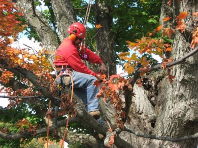 Deerfield Valley Woodlot management