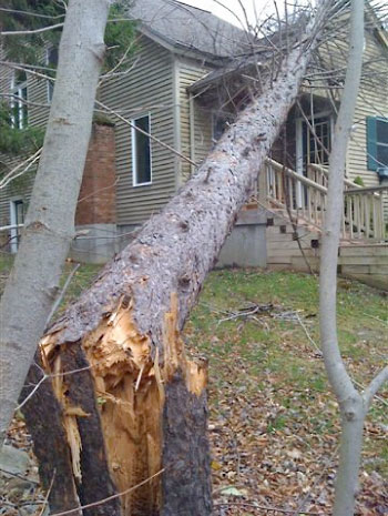 Emergency Tree Service Southern Vermont