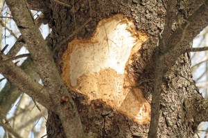 signs of tree distress