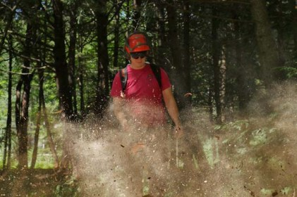 Best tree removal company wilmington vt