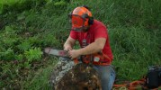 Chain saws and tree removal