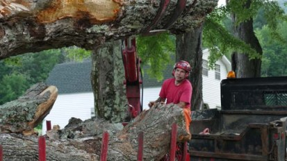 Fully insured tree care company