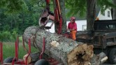 Professional tree removal Vermont
